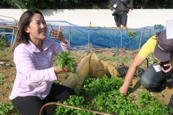 沖縄本島北部の離島・伊江島でパクチー収穫の農業体験。
