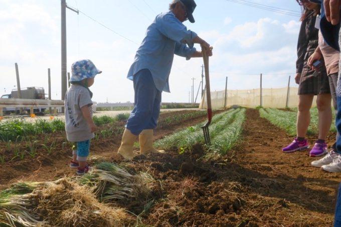 沖縄本島北部の離島・伊江島で行われた農業体験で、島らっきょうを掘り起こす方法を教えてもらう。