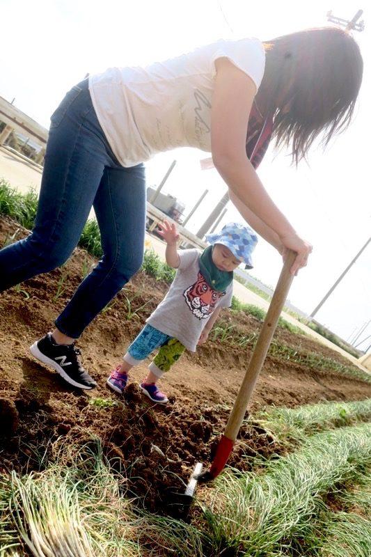 沖縄本島北部の離島・伊江島で島らっきょうを掘り起こすカーチャン。