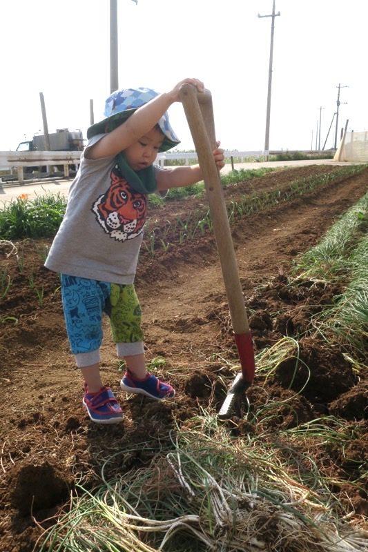 沖縄本島北部の離島・伊江島で農業体験で島らっきょうを掘り起こすお子サマー。