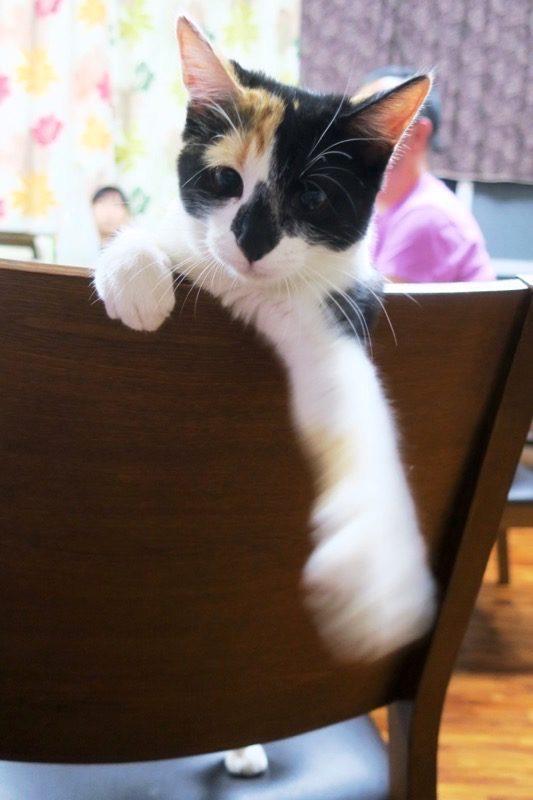 伊江島「民宿かりゆし」にいる人懐っこい三毛猫。