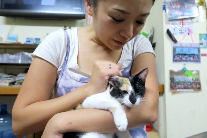 伊江島「民宿かりゆし」まだ幼い三毛猫は、おばちゃんに捕まってしまった。