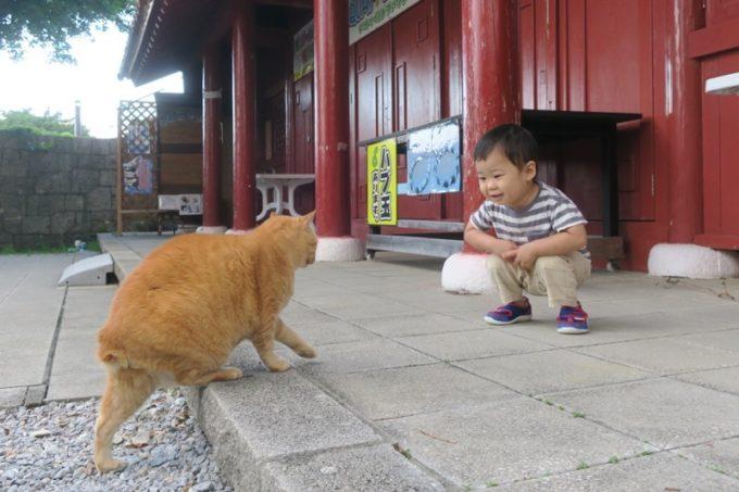 読谷「ホテルむら咲むら」の施設にいた野良猫とお子サマー。