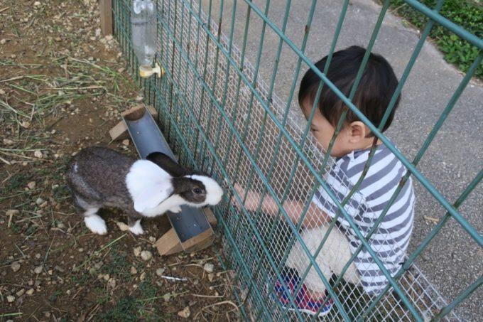 読谷「ホテルむら咲むら」でウサギを触ろうとするお子サマー。