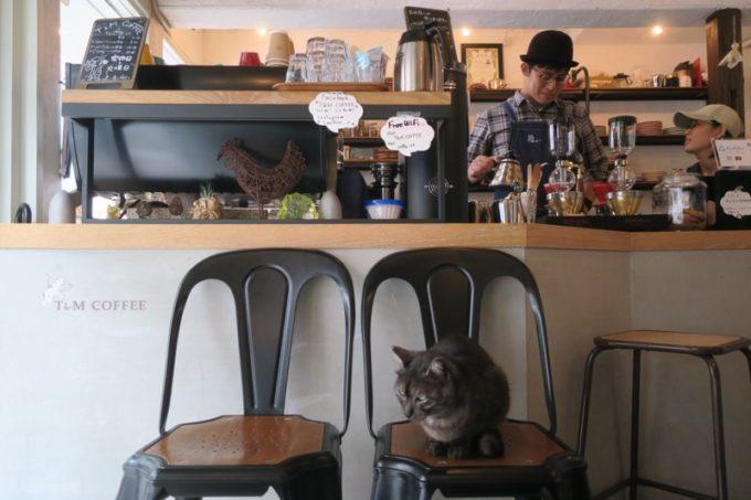 那覇・牧志「T&M COFFEE(ティーアンドエムコーヒー)」の店内入り口にいた猫。