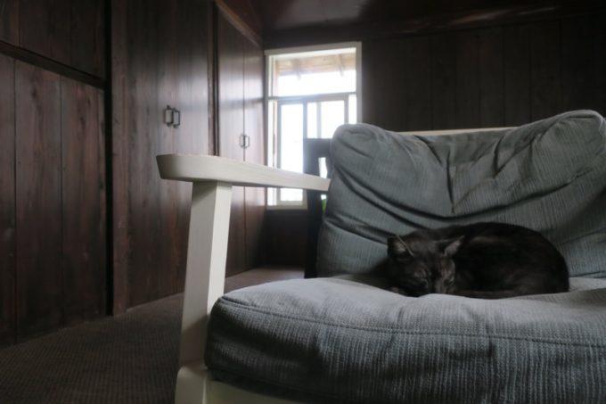 那覇・牧志「T&M COFFEE(ティーアンドエムコーヒー)」のソファー席で寝ていた猫。
