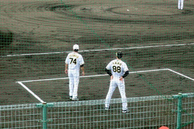 阪神タイガースの宜野座キャンプ(プロ野球春季キャンプ2019)久しぶりにお目にかかった矢野燿大監督。