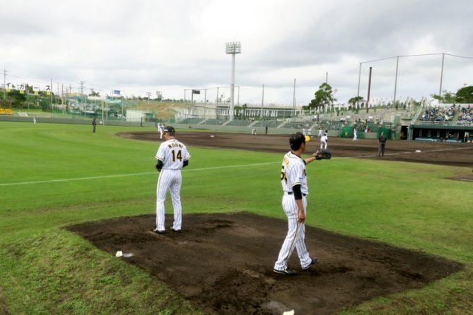 阪神タイガースの宜野座キャンプ(プロ野球春季キャンプ2019)で投球練習する桑原謙太朗投手(背番号64)と、能見篤史投手(背番号14)。