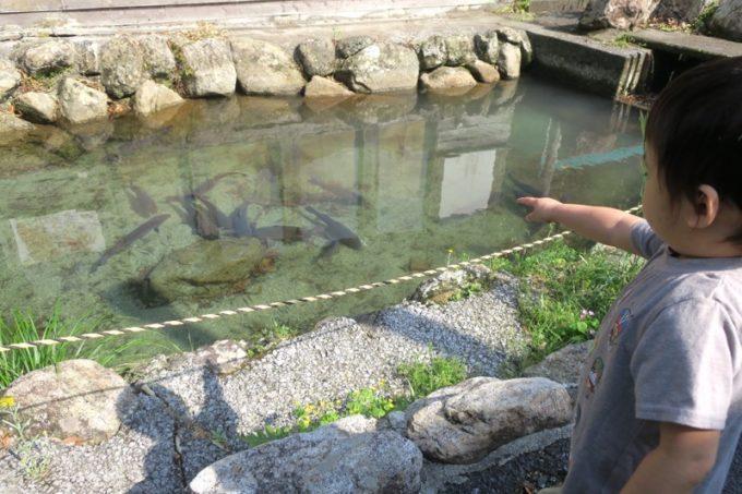 「宮崎ひでじビール」の敷地内にある池と泳ぐ魚