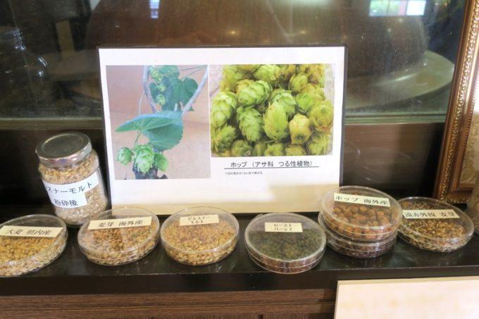 「宮崎ひでじビール」にあったホップの展示(その2)