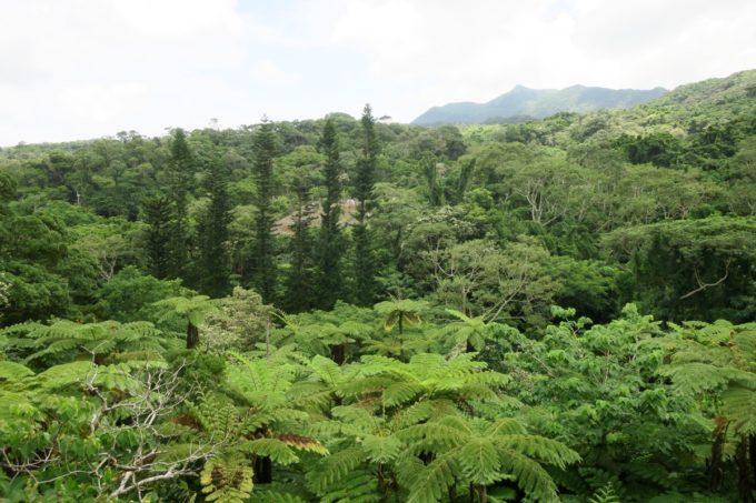 名護「DINO 恐竜 PARK やんばる亜熱帯の森」の広々としたジャングル。
