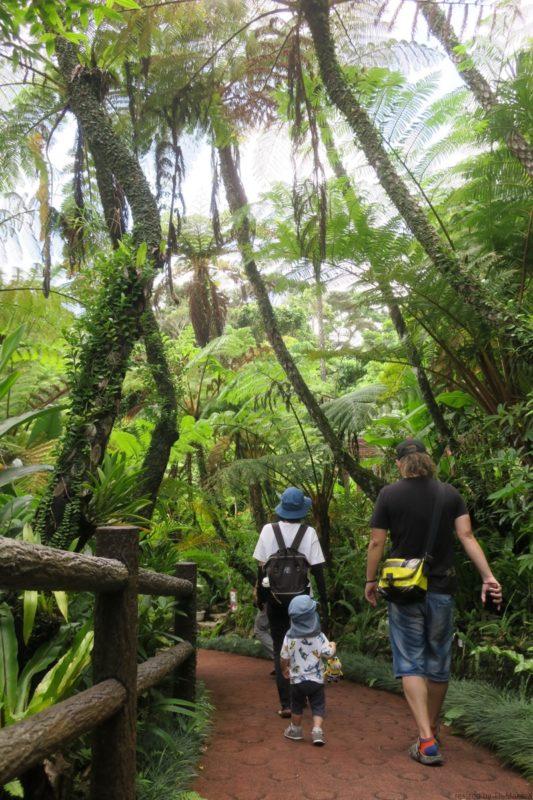 名護「DINO 恐竜 PARK やんばる亜熱帯の森」ジャングルを進むブロガー家族2組