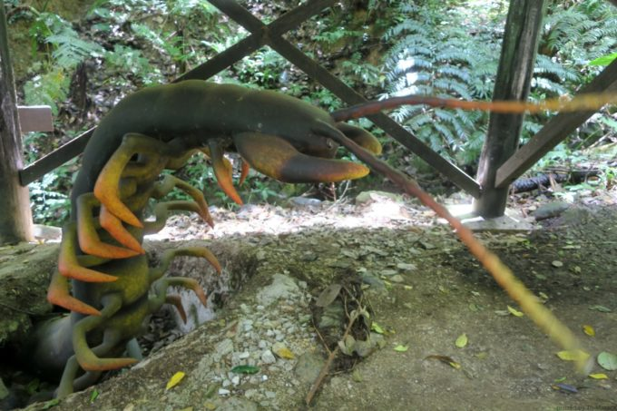 名護「DINO 恐竜 PARK やんばる亜熱帯の森」急にオオムカデ?