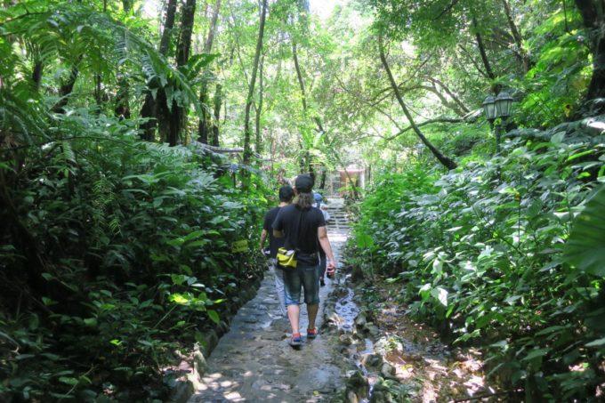 名護「DINO 恐竜 PARK やんばる亜熱帯の森」やんばるのジャングルを進む。