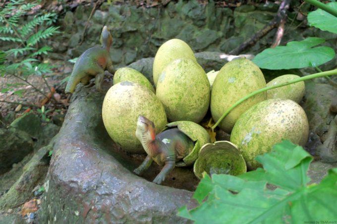 名護「DINO 恐竜 PARK やんばる亜熱帯の森」卵から帰ったばかりの恐竜ベビー。