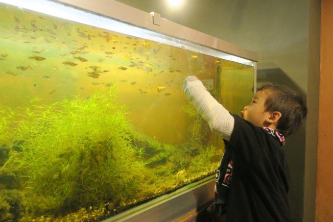 沖縄市「オークレストラン」水槽のある個室席もあった