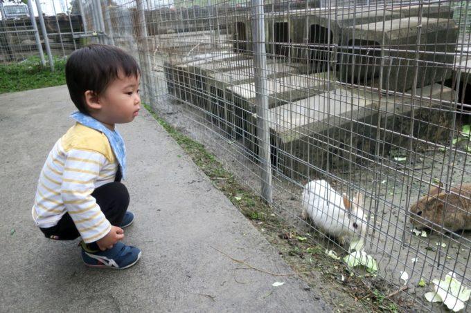 八重瀬「アグリハウスこちんだ」のミニ動物園にはウサギがいる。