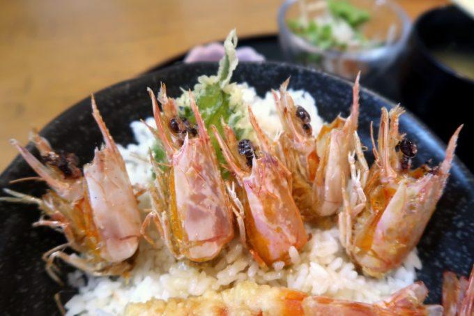 沖縄県宜野座村「車えびレストラン 球屋」上えび天丼の海老を避けると、頭が出てきた。