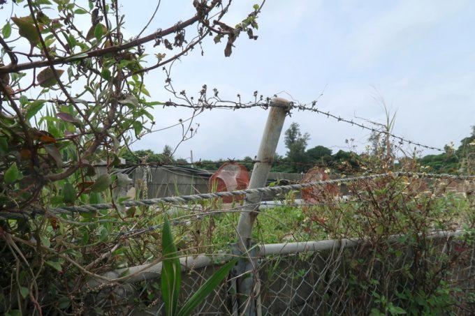 沖縄県宜野座村「車えびレストラン 球屋」の隣にある車海老の養殖場
