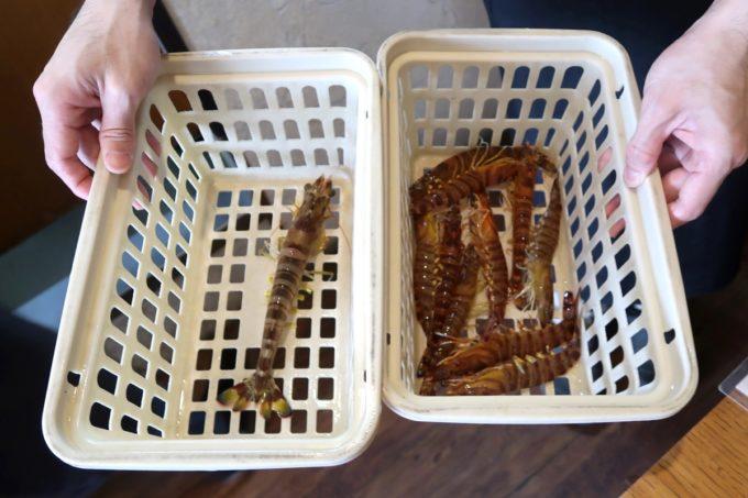 沖縄県宜野座村「車えびレストラン 球屋」この日いただく車海老を調理前に見せてもらえる