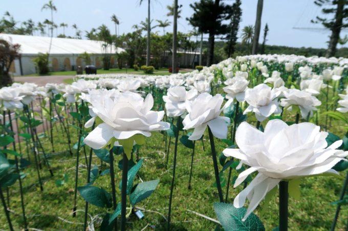 沖縄「東南植物楽園」真っ白なお花が全開で咲いている、と思ったら造花だった。