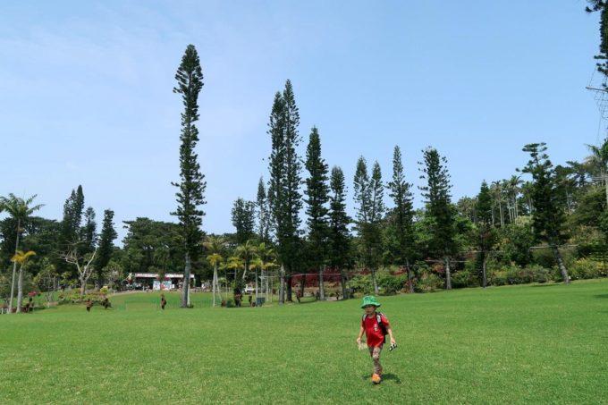 沖縄「東南植物楽園」大王ヤシ広場で自由に遊ぶお子サマー