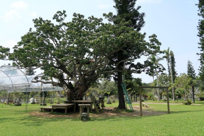 沖縄「東南植物楽園」にある遊具コーナー