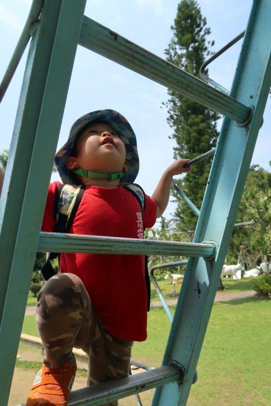 沖縄「東南植物楽園」高いハシゴに登り始めるお子サマー