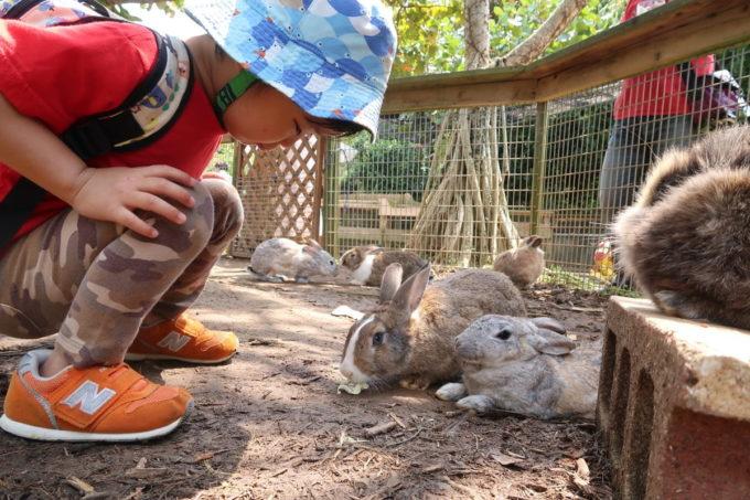 沖縄「東南植物楽園」仲良しチャンプルー広場でウサギさんに近寄るお子サマー