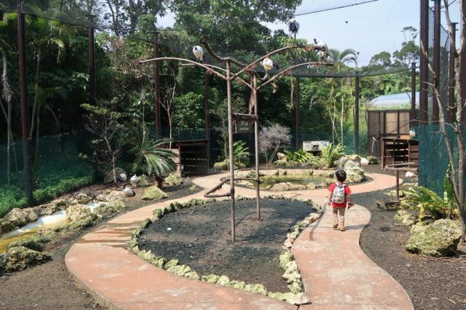 沖縄「東南植物楽園」バードオアシスの内部の様子