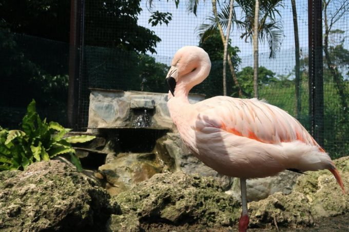沖縄「東南植物楽園」バードオアシスにいるフラミンゴ
