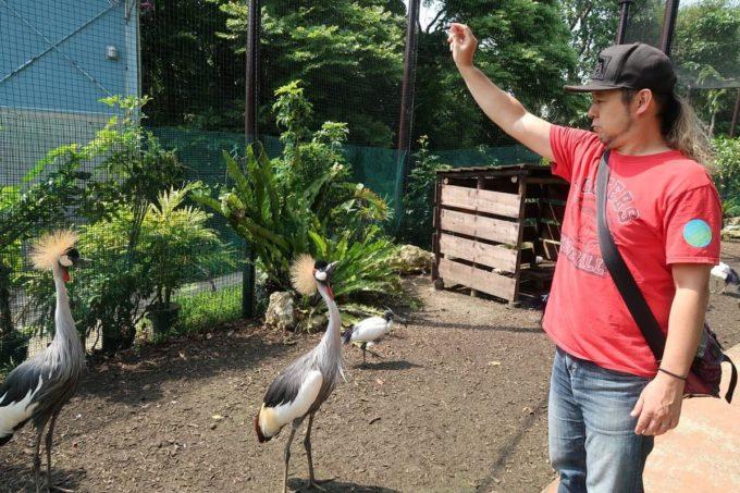 沖縄「東南植物楽園」バードオアシスでホオジロカンムリヅルに餌やりのフリをするご主人サマー