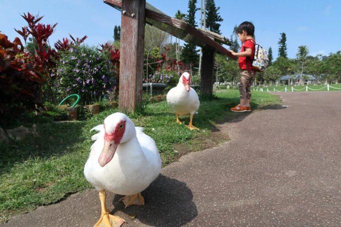 沖縄「東南植物楽園」お散歩するバリケンとお子サマー