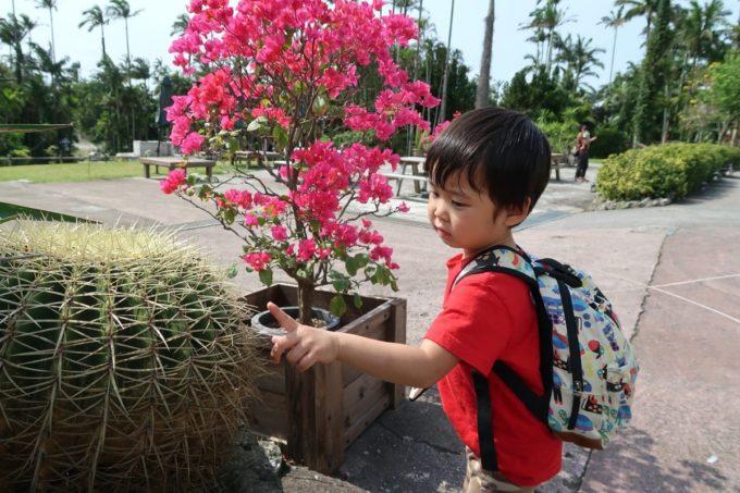 沖縄「東南植物楽園」サボテンのトゲに触れてみるお子サマー