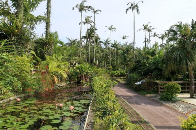 沖縄「東南植物楽園」植物園の内部の様子