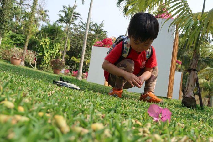 沖縄「東南植物楽園」植物園で何かの種らしきものを「どんぐり!」と言いながら拾い集めるお子サマー