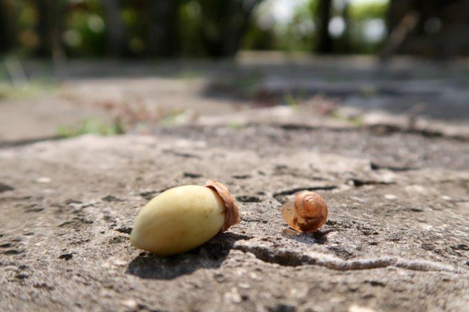 沖縄「東南植物楽園」植物園にいたカタツムリの赤ちゃんと何かの種の比較