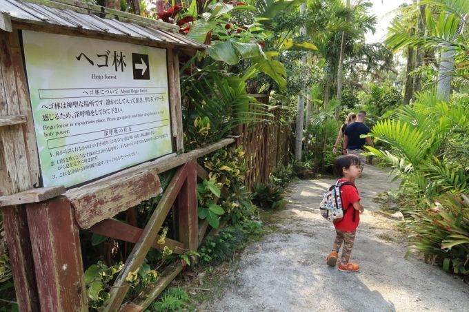沖縄「東南植物楽園」植物園のヘゴ林へ行ってみる