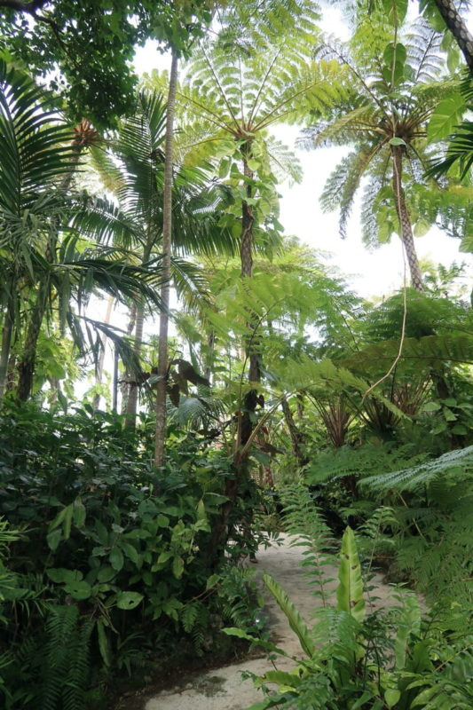 沖縄「東南植物楽園」植物園の鬱蒼としたヘゴ林