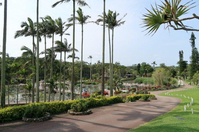 沖縄「東南植物楽園」入ってすぐヤシの木などが植えられている