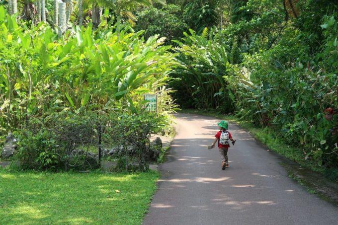 沖縄「東南植物楽園」ボタニカルな散策路を勝手に歩くお子サマー