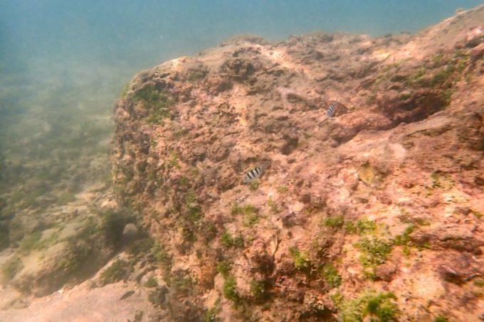 北谷町「砂辺ビーチ」でシュノーケルした時の海中の様子(その2)