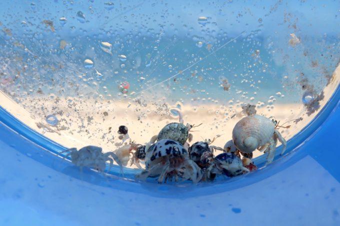 北谷町「砂辺ビーチ」ヤドカリやカニを捕まえた