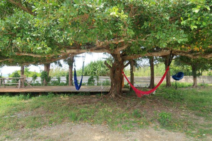 糸満「海ん道(うみんち)」の大きな木とハンモック