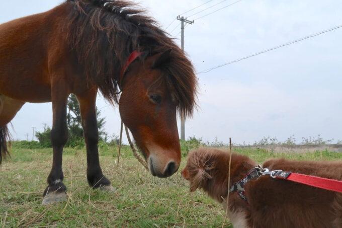糸満「海ん道(うみんち)」双方のにおいを確認をし合う馬とお犬サマー