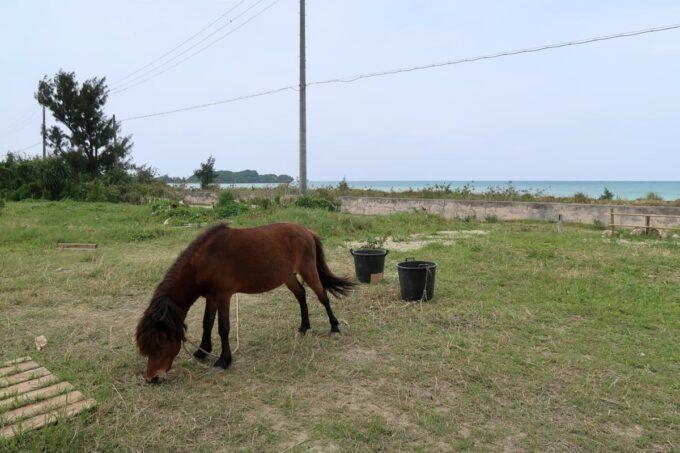 糸満「海ん道(うみんち)」のキャンプサイト横に繋がれる1匹の馬