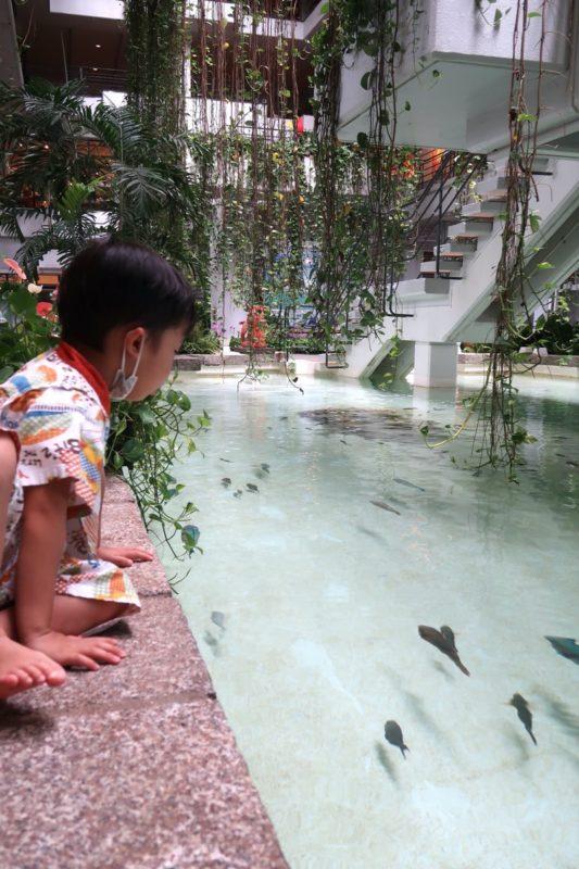 沖縄・恩納村「ホテルムーンビーチ」海水が引かれた池は、さながらミニ水族館のようだった