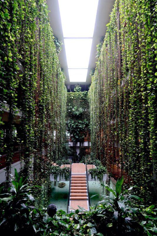 沖縄・恩納村「ホテルムーンビーチ」アトリウムの長さ10m以上のポトスが作るグリーンカーテンが印象的だった
