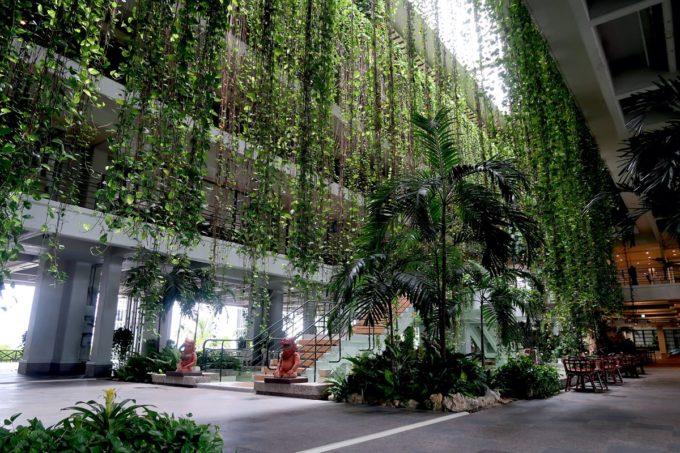 沖縄・恩納村「ホテルムーンビーチ」ポトスのグリーンカーテンは角度を変えても美しい