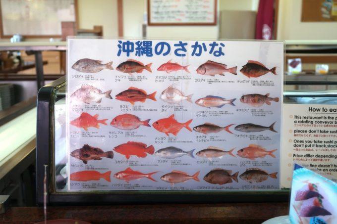 北谷町美浜「回転寿司 一番亭」沖縄のさかなのイラスト